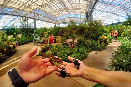 Butterfly Wonderland is a conservatory in Scottsdale Arizona