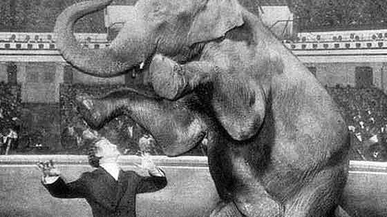Promo photo of Houdini with elephant above him on raised hind legs