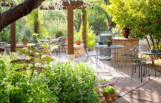 Visit Tucson Botanical Gardens for Butterfly Magic