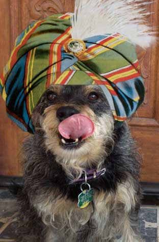 Magic dog Harriette Houdini wearing swami hat